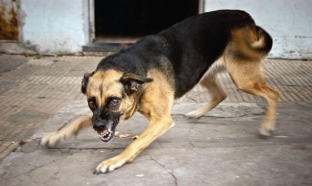 В Одесской области мужчина натравил на полицейского собаку
