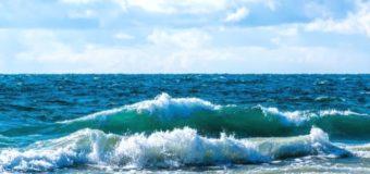 В Мариуполе убирают с побережья мертвую рыбу