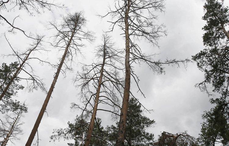 Над Украиной нависла экологическая катастрофа