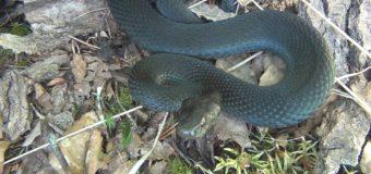 На Львовщине от укуса змеи умерла 4-летняя девочка
