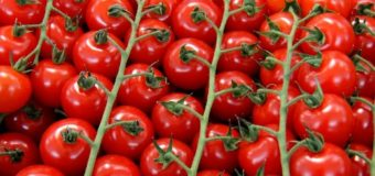 Немцы хотят выращивать помидоры на Марсе