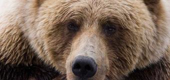 В Харьковской области на сотрудницу базы отдыха напал медведь