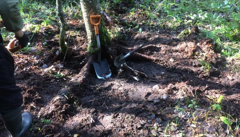 Под Житомиром пенсионеры нашли клад в огороде
