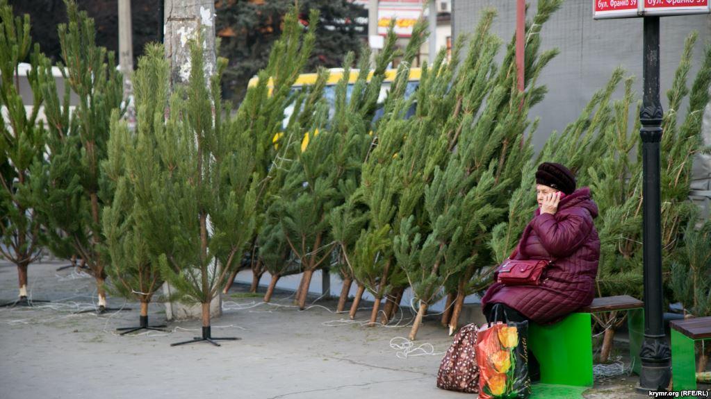Новый год: стали известны цены на елки