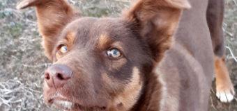 В Киеве на рынке грабитель натравил собаку на полицию