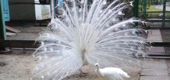 Під час інфотуру учасники запорізького фестивалю відвідали контактний зоопарк