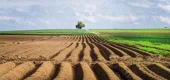 «Только через референдум»: В ОППОЗИЦИОННОЙ ПЛАТФОРМЕ – ЗА ЖИЗНЬ заявили о недопустимости открытия рынка земли