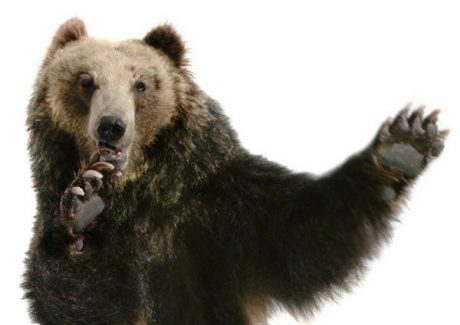 В Канаде мужчину оштрафовали за драку с медведем