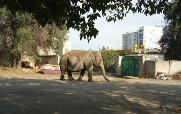 В Харькове неподалеку детского сада разгуливал слон. Видео