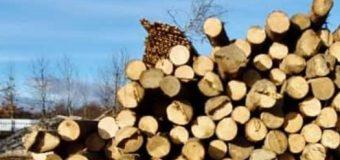 Поліцейські розслідують справу щодо незаконної вирубки лісу на Прикарпатті