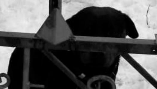 На Харківщині від нападу собаки загинув хлопчик