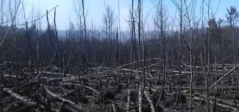 Пожежа у Чорнобильській зоні: поліція відкрила кримінальне провадження. Відео
