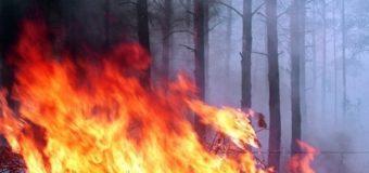 Новый пожар на Луганщине: огонь подступает к электроподстанции